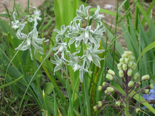 цветы и цветки заповедник ростовский